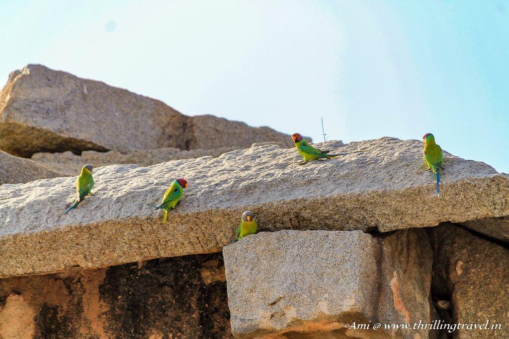 Parrots on Hemakuta temples