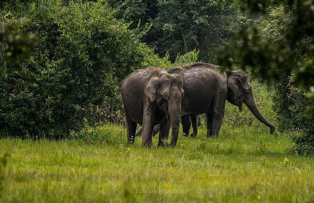 Muthanga Reserve                                         Image Credits: Kalidas Pavithran