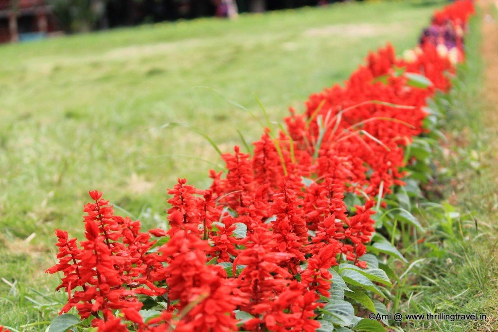 Colorful hedges in Lalbagh