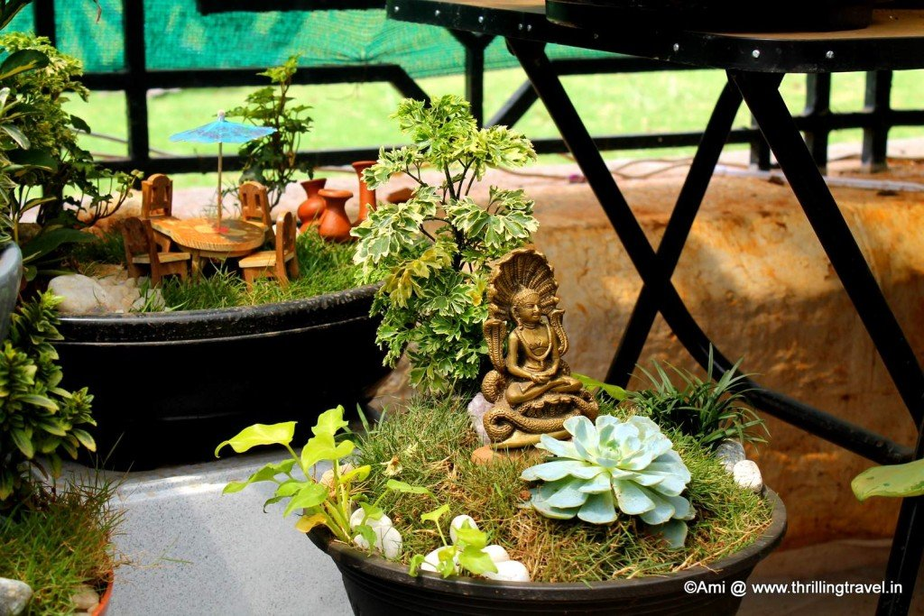 One of the Bonsai set-ups in Lalbagh