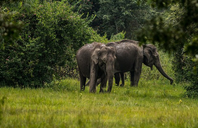 Elephants in Muthanga Sanctuary - Hill station Wayanad