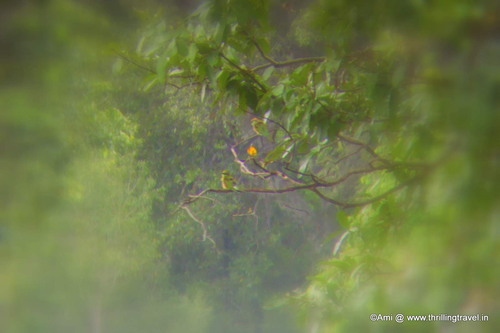 Birds through the binoculars at the Bheemeshwari Fishing Camp