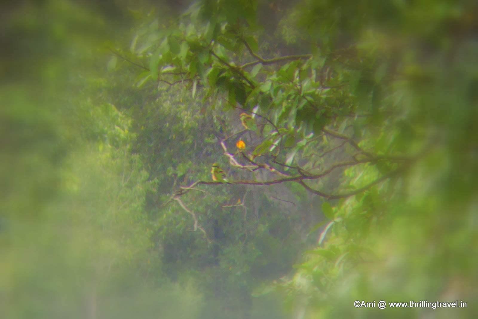 Birds through the binoculars at the Bheemeshwari Fishing Camp