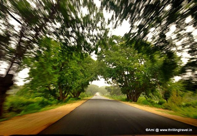 Zipping along the Bangalore- Chintamani By Pass through the Canopy of trees