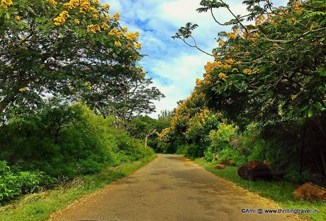 Yellow Blossoms lining up to greet you as you enter Horsley Hills