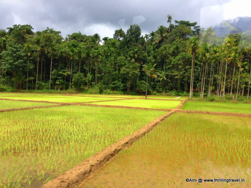 Fields along the way to Banasura Sagar Dam