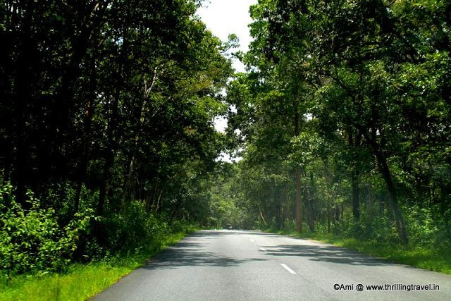 Along the way to Wayanad from Bangalore