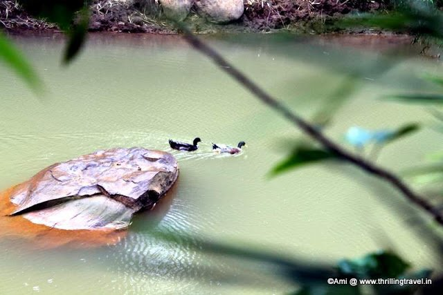 Little pond with ducks within the resort