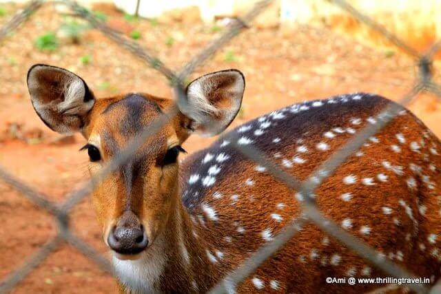 Deer at the Environment Park at Horsley Hills