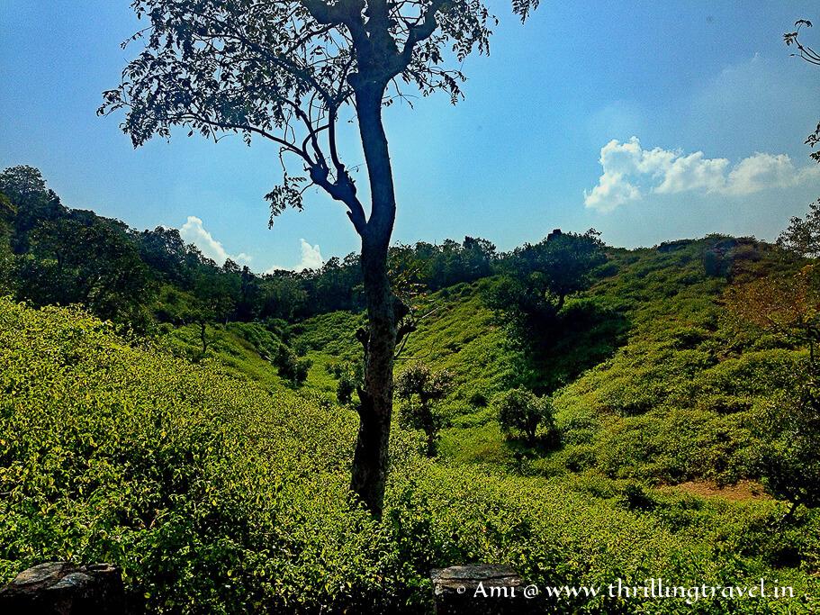 Landscape enroute to Kumbhalgarh fort