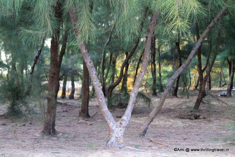 Greens around the Apsarakonda Beach