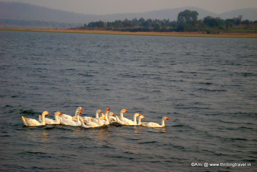Birds of Kabini River