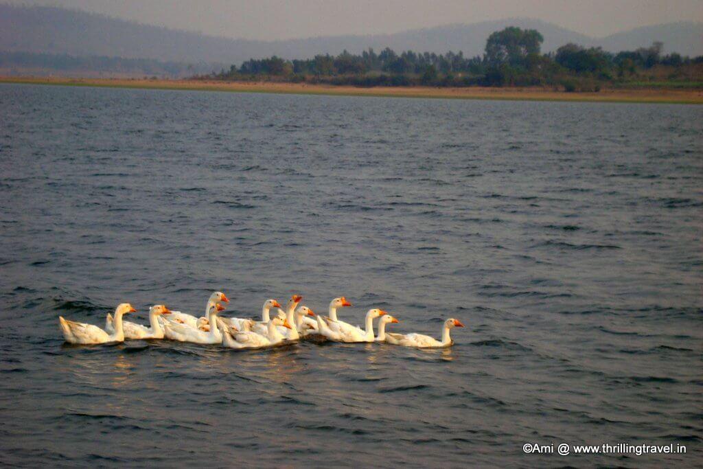 Birds of Kabini River