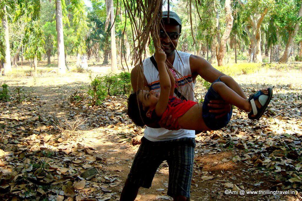 Swinging along the Banyan Trees