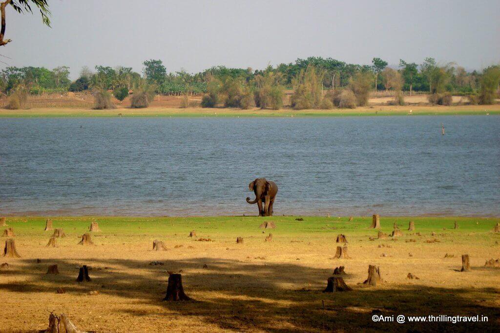 Elephant near Kabini River