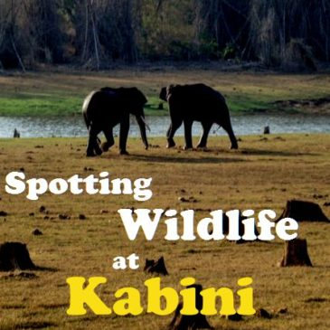 A long weekend at Kabini