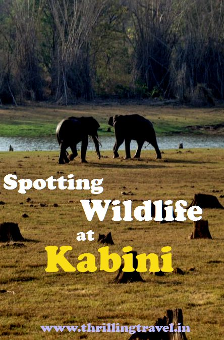 Kabini - www.thrillingtravel.in