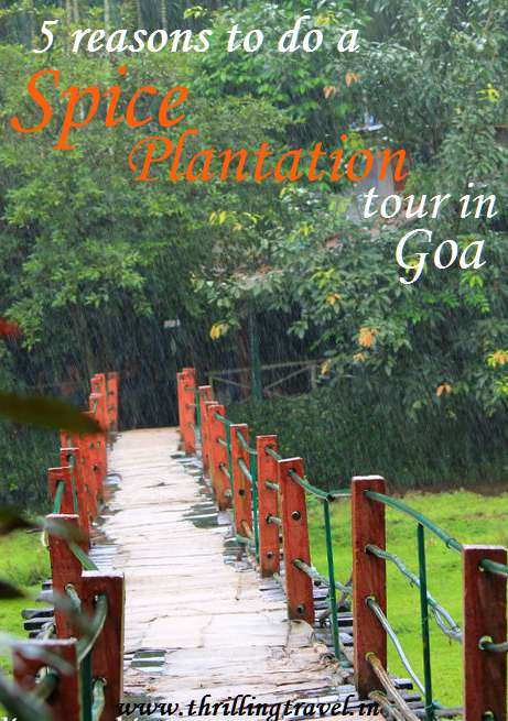Spice Plantation tour, Goa