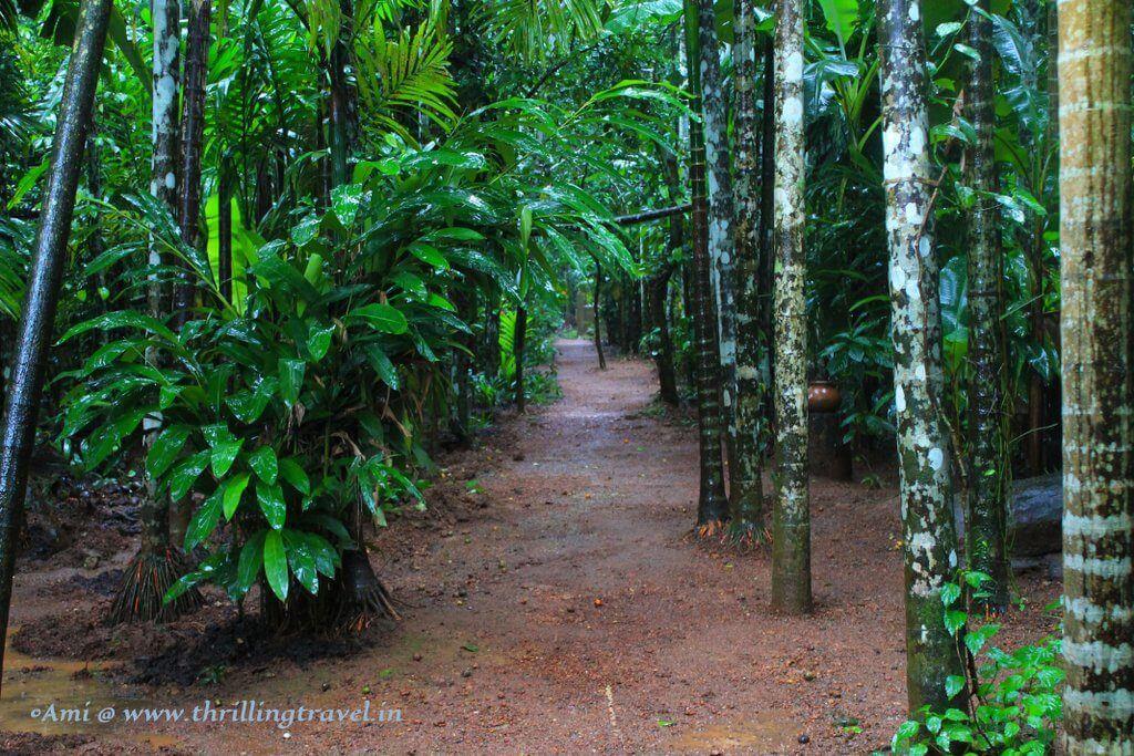 Tour of the Spice Plantation - Goa beyond Beaches