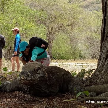 Selfie with the Komodo Dragon at Komodo National Park