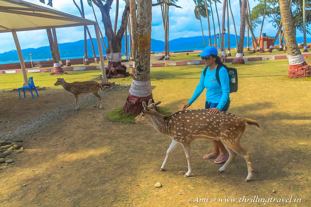 My new friend - the deer at Ross Island, Andamans