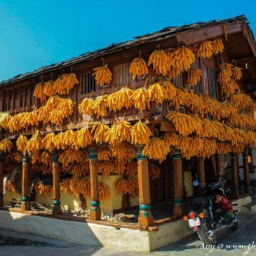 The charming corn village of Sainji, Mussoorie