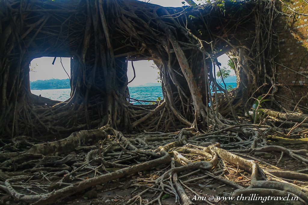 The waves of Andaman Sea through the root covered windows of ruins on Ross Island
