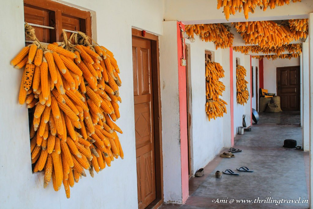Corn hung in the passage of a house in the corn village