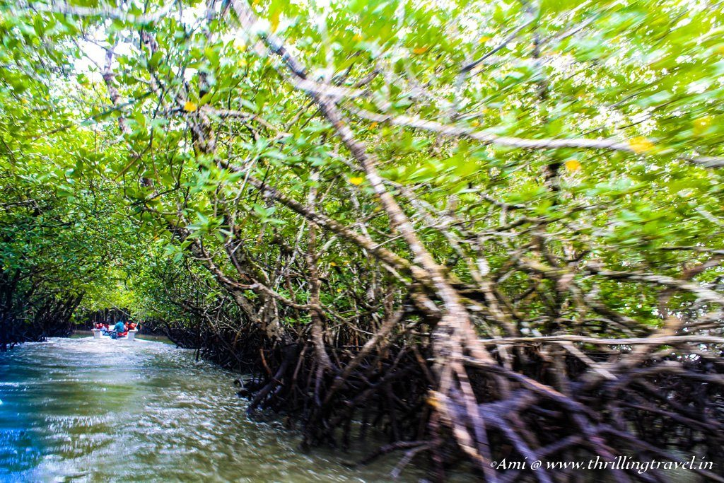 Along the Mangrove routes of Baratang Island, Andamans