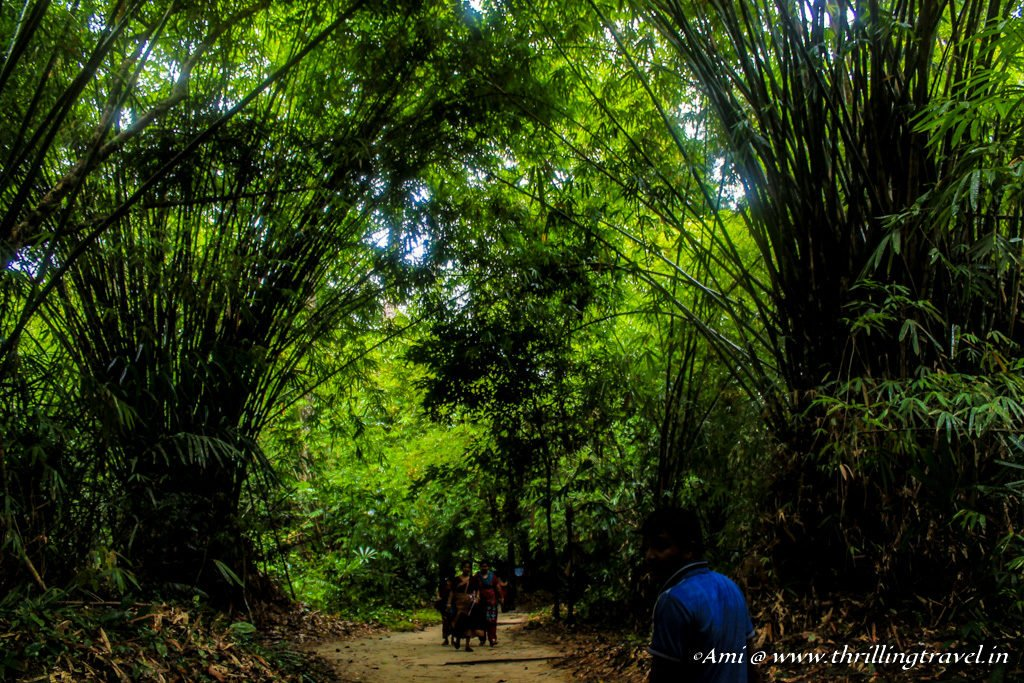 The scenic hike to the Limestone Caves of Baratang Island
