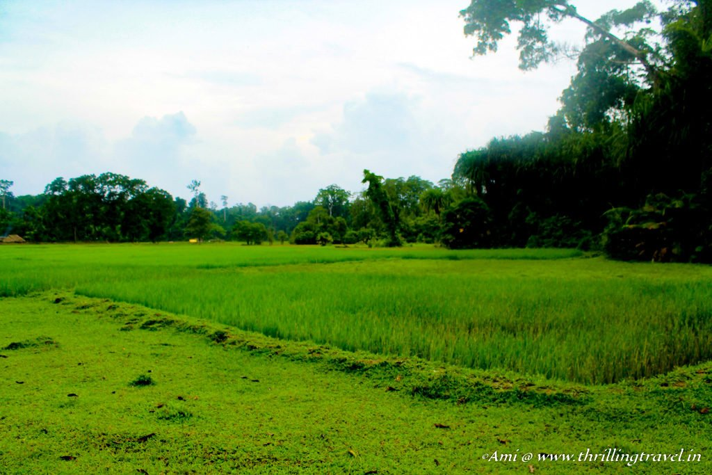 The lovely green cover along the hike to the limestone caves of Baratang Island