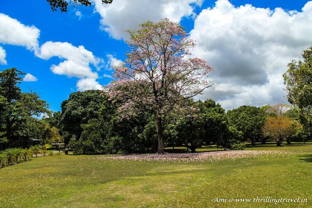 Perfect place to exchange the vows at Chateau de Labourdonnais, Mauritius