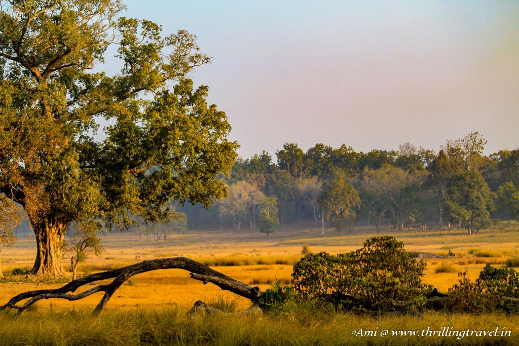 essay on kanha national park India's kanha national park provides the setting for rudyard kipling's classic, the jungle book plan your trip there with this travel guide.