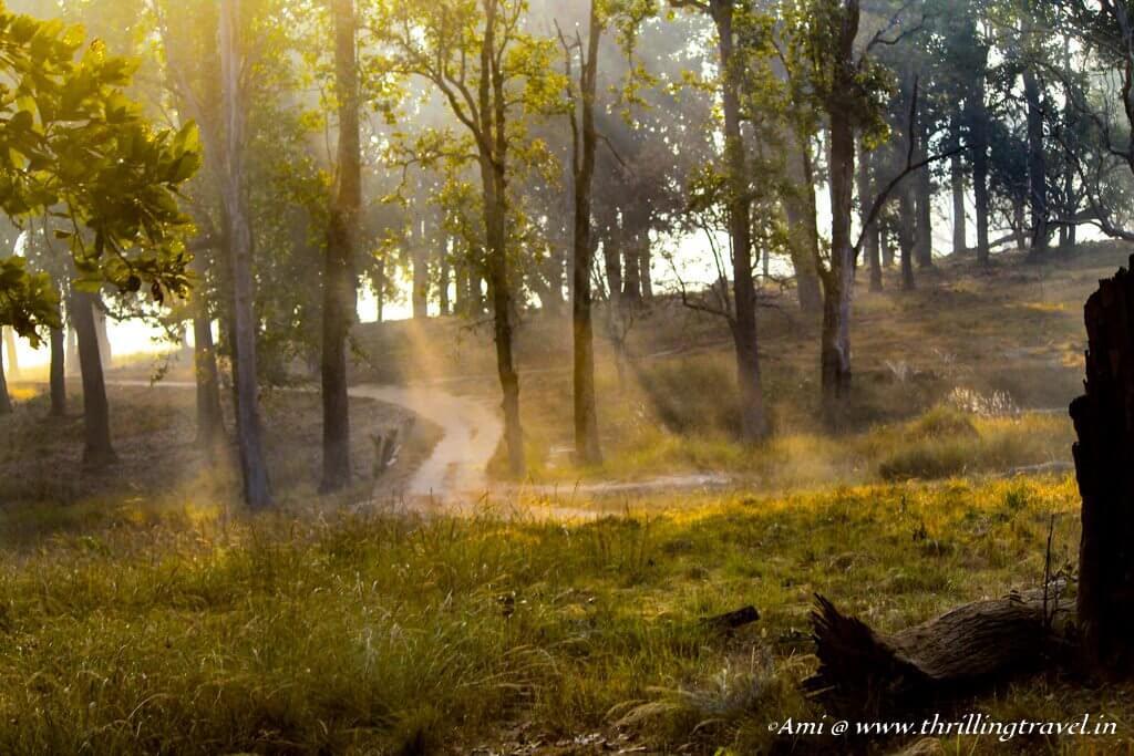 Sunlight filtering through the lovely Kanha National Park