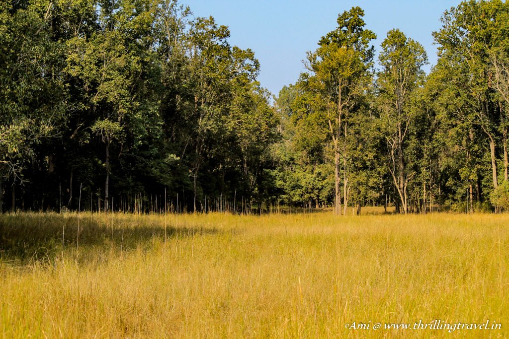The grasslands of Kanha National Park