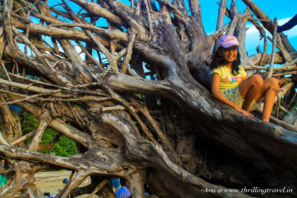Driftwood art at Chidiya Tapu