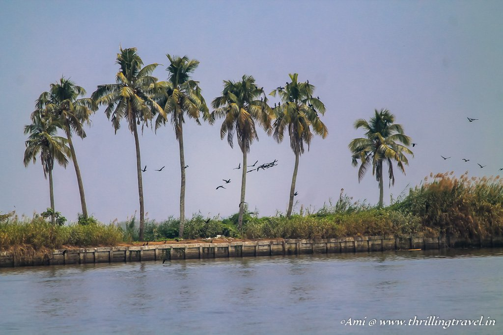 The simple and natural beauty of the Backwaters of Kerala