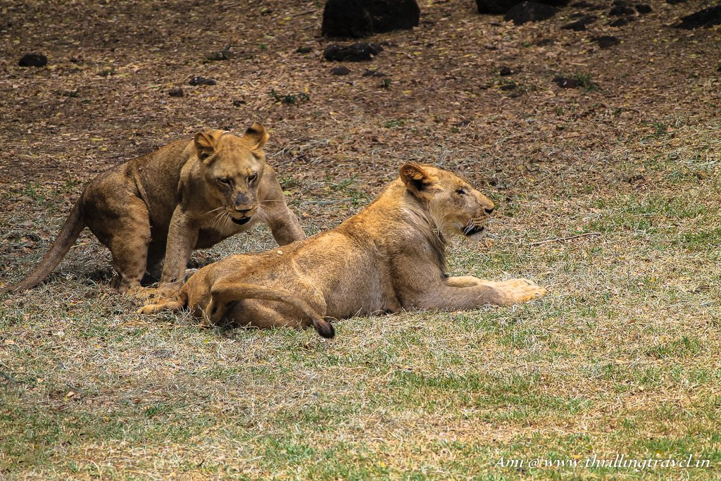 Wildlife & Nature Parks of Mauritius