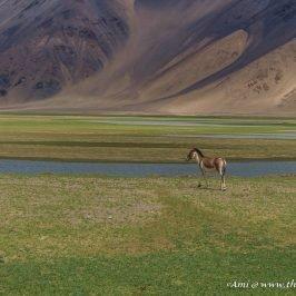 Indus river near Chushul, enroute to Tso Moriri