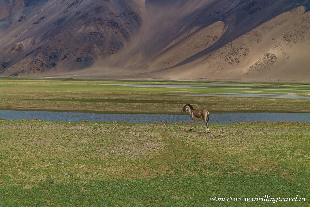 Along the Indus River to Tso Moriri