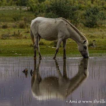 Surreal Beauty & Calming Reflections of Nubra Valley Ladakh