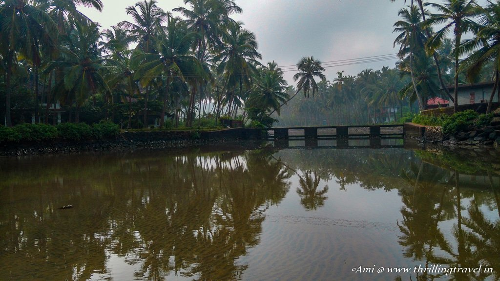 The backwaters at the Thottada Beach