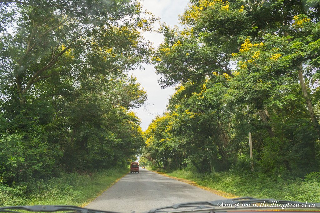 Drive through Mysore to Kannur