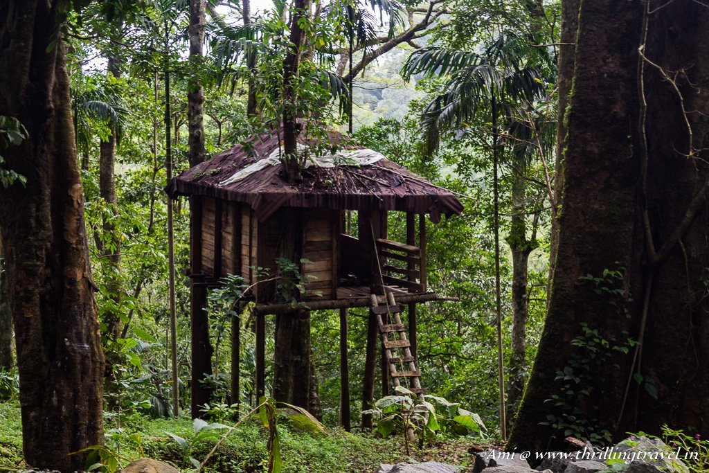 Tree house spotted along our trek