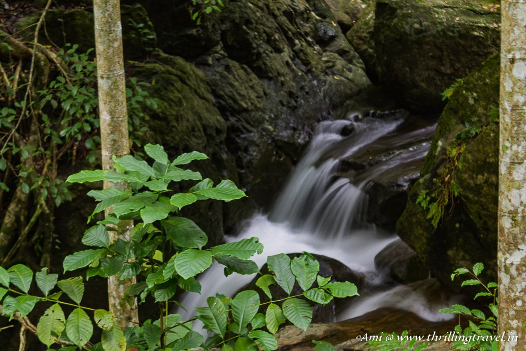 Streams and Waterfalls of the Dare Nature Camp