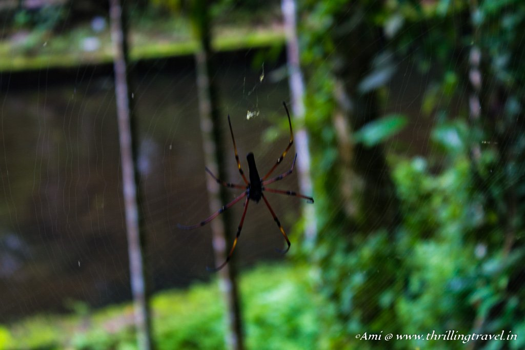 Caught in the web spun by Wayanad in Monsoons