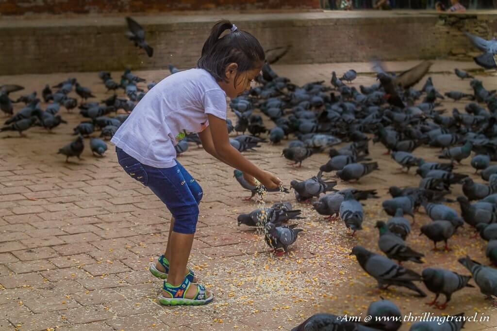 Pigeon feeding at the Jaganath Temple