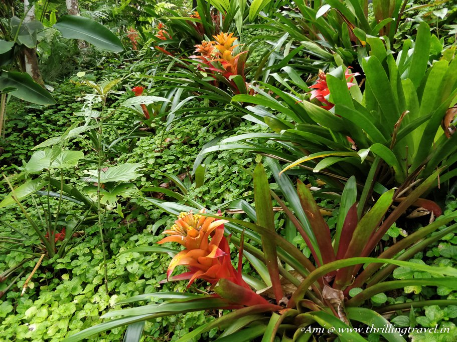 The Greens dotted by the colored flowers at The Habitat Penang Hill