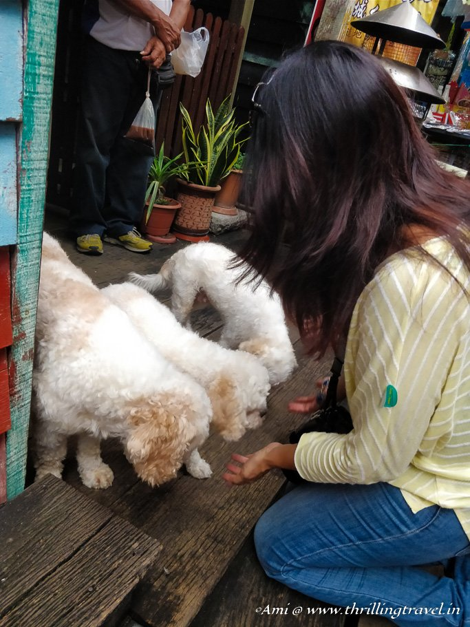 Playing with the dogs at Chew Jetty