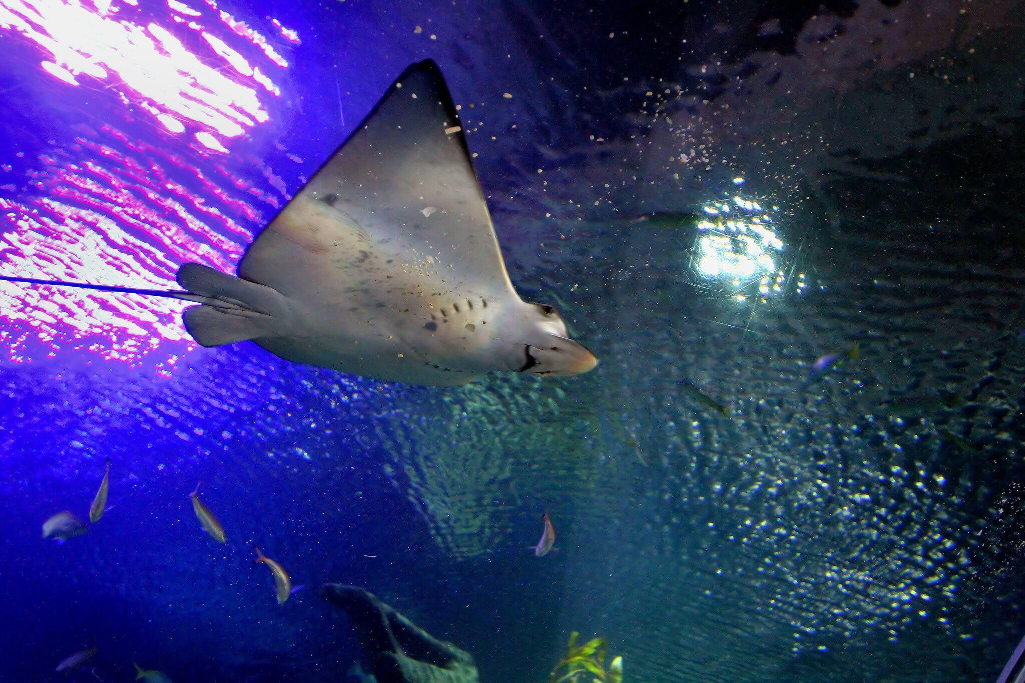 Aquaria KLCC, Kuala Lumpur